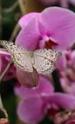 orchidée01.png