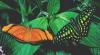 papillon.06.png