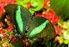 papillon.04.png